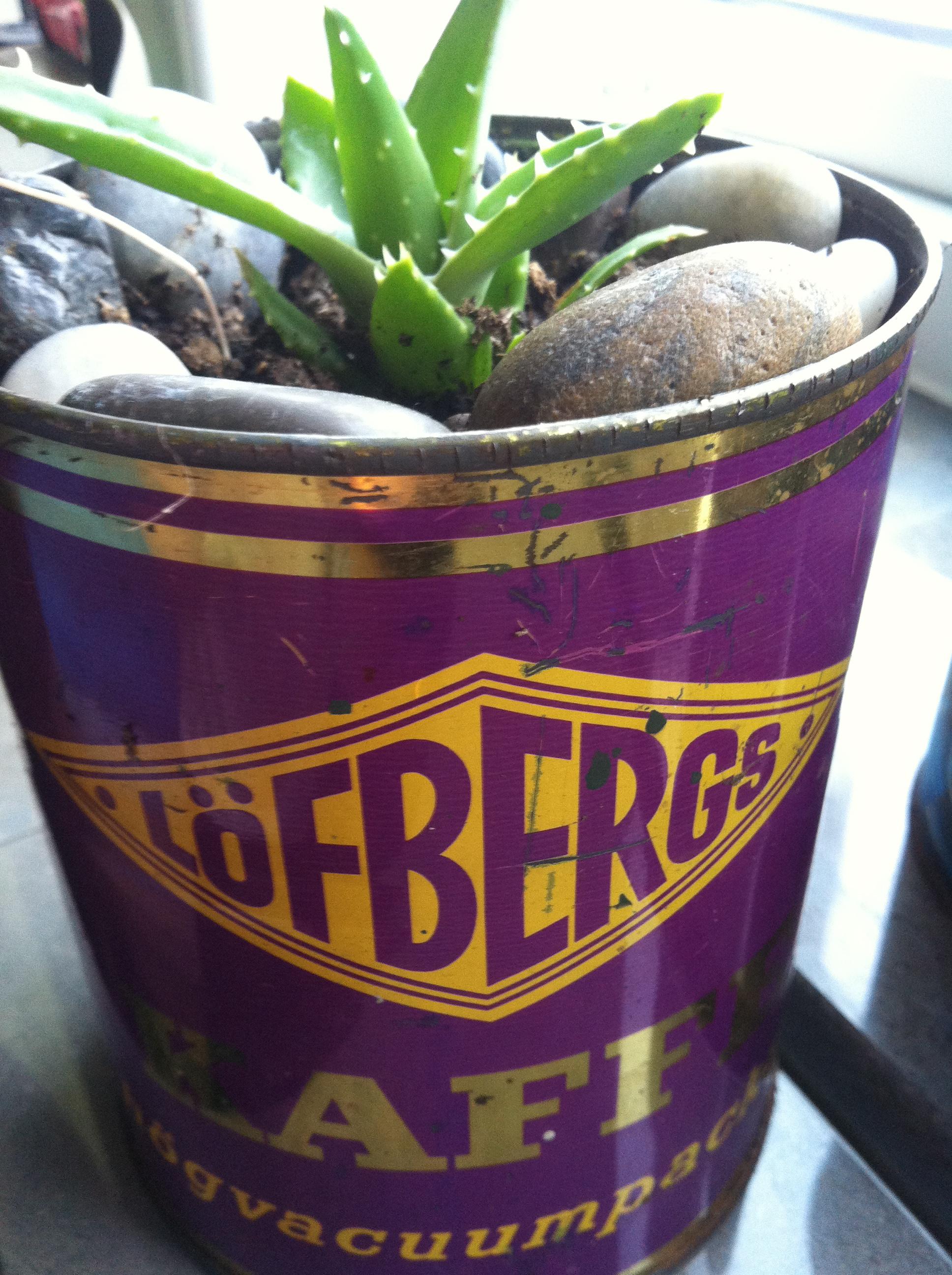 gammal plåtburk med aloe vera planta