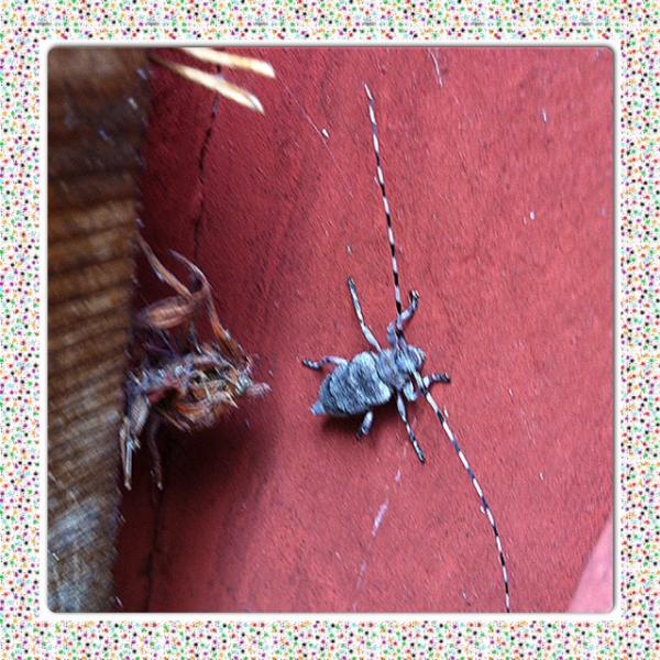 Vad är detta för insekt?