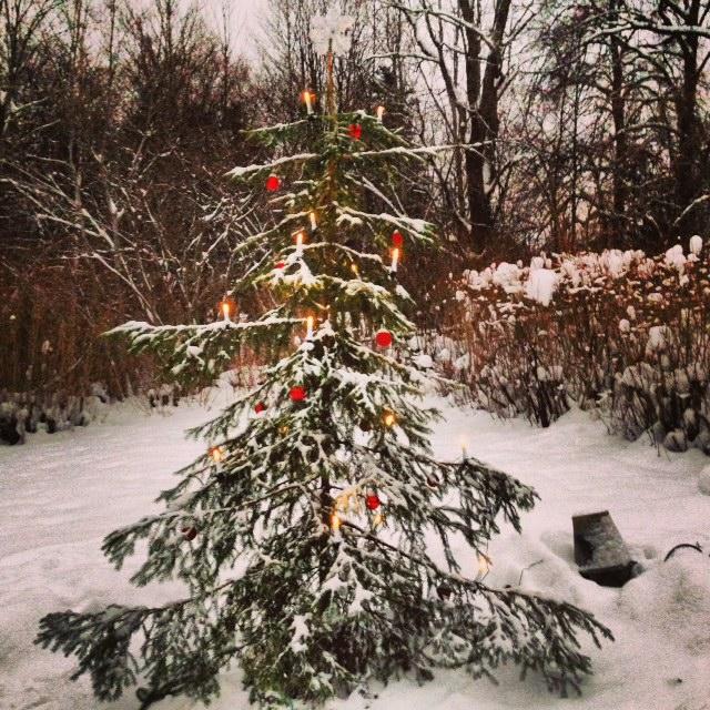 Så här ska en julgran se ut!