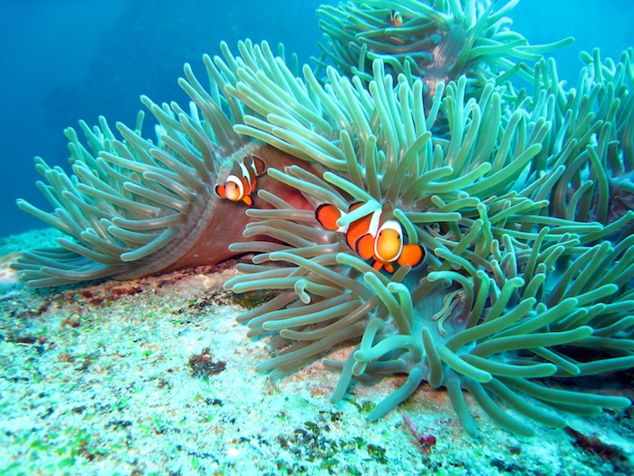 Nemo-Similian Islands