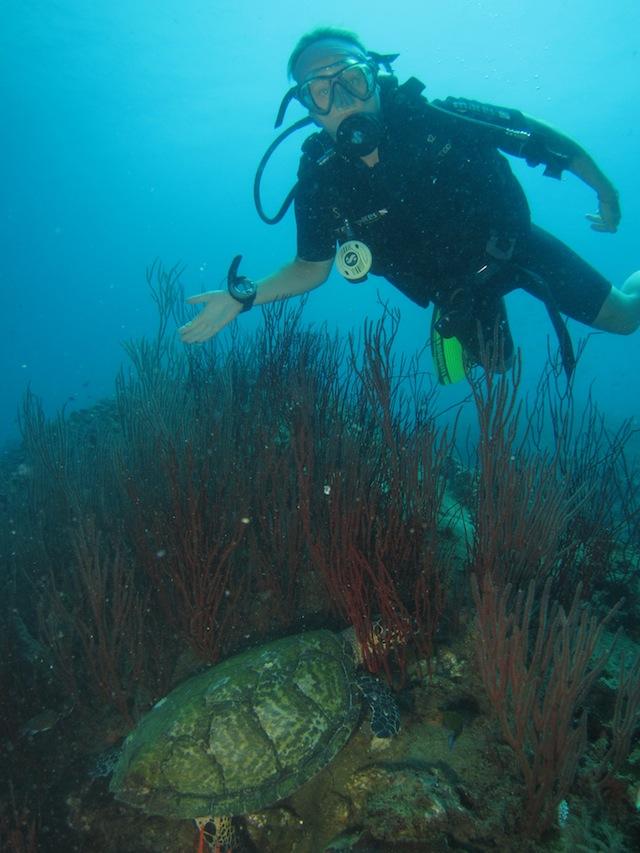 Sköldpadda - Thailand