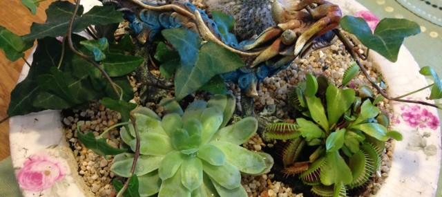 Blomgrupp med kaktusar