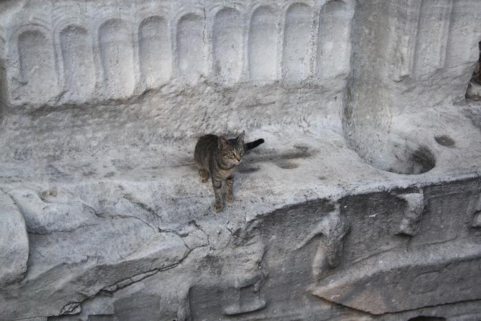 Katt i Istanbul