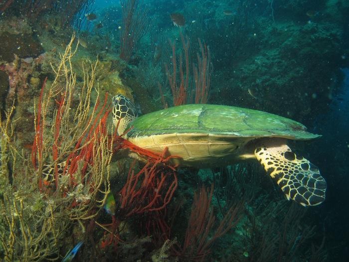Vacker sköldpadda