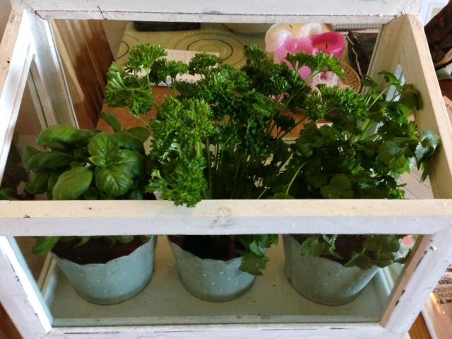 Växthus med kryddväxter