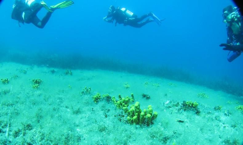 Dykning Adriatiska havet
