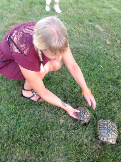 Fina sköldpaddor