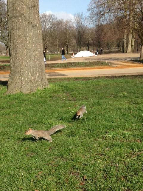 Ekorrar i Hyde park