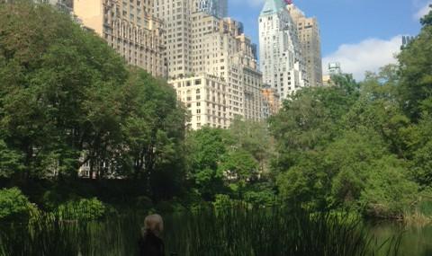Morgonpromenad i Central Park