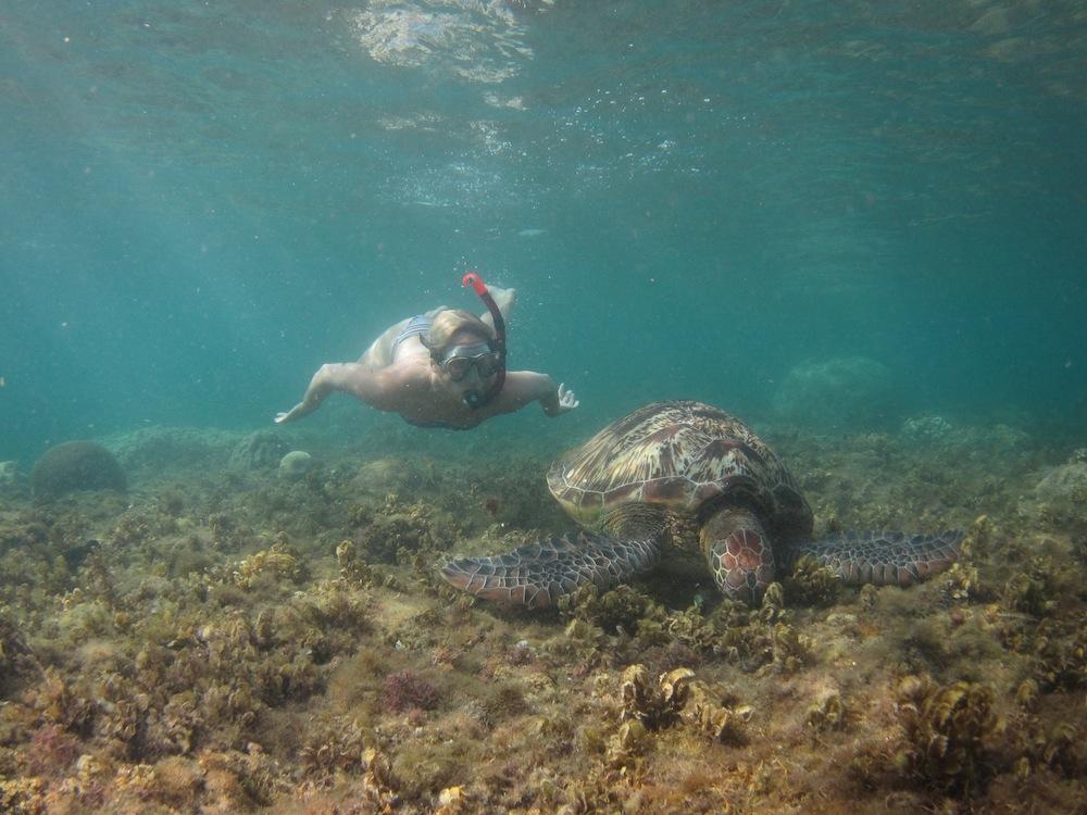 Snorkling med sköldpadda i Filippinerna
